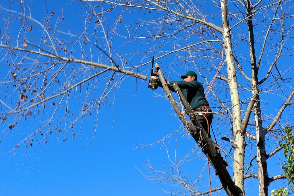Contact Us-Auburndale FL Tree Trimming and Stump Grinding Services-We Offer Tree Trimming Services, Tree Removal, Tree Pruning, Tree Cutting, Residential and Commercial Tree Trimming Services, Storm Damage, Emergency Tree Removal, Land Clearing, Tree Companies, Tree Care Service, Stump Grinding, and we're the Best Tree Trimming Company Near You Guaranteed!