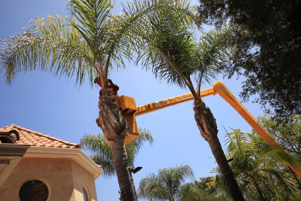 Palm Tree Trimming-Auburndale FL Tree Trimming and Stump Grinding Services-We Offer Tree Trimming Services, Tree Removal, Tree Pruning, Tree Cutting, Residential and Commercial Tree Trimming Services, Storm Damage, Emergency Tree Removal, Land Clearing, Tree Companies, Tree Care Service, Stump Grinding, and we're the Best Tree Trimming Company Near You Guaranteed!