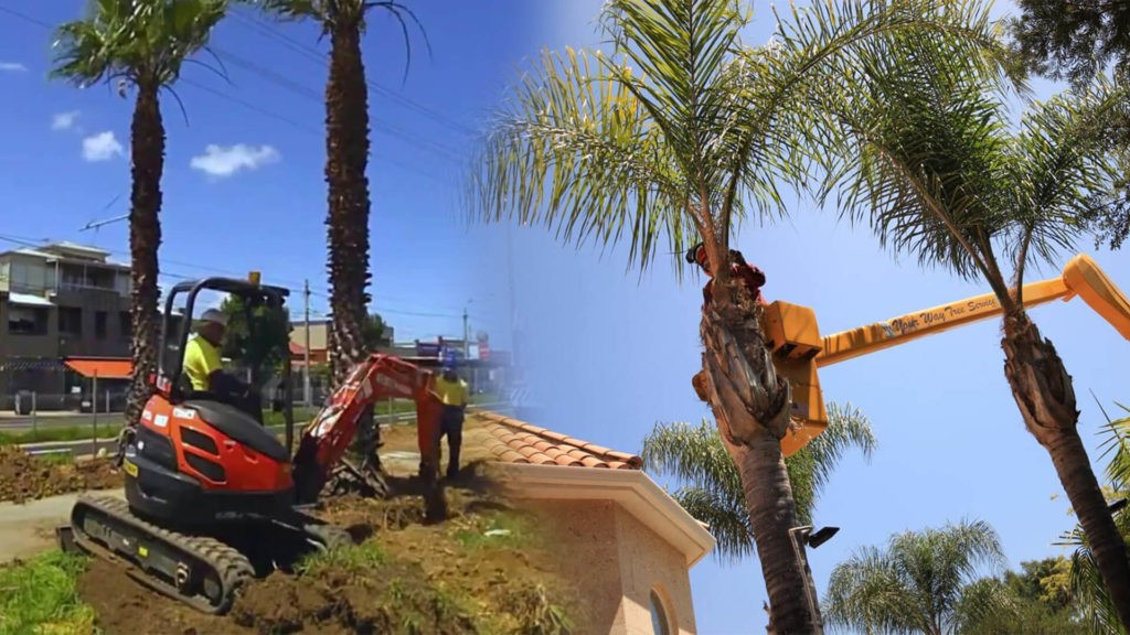 Palm tree trimming & palm tree removal-Auburndale FL Tree Trimming and Stump Grinding Services-We Offer Tree Trimming Services, Tree Removal, Tree Pruning, Tree Cutting, Residential and Commercial Tree Trimming Services, Storm Damage, Emergency Tree Removal, Land Clearing, Tree Companies, Tree Care Service, Stump Grinding, and we're the Best Tree Trimming Company Near You Guaranteed!
