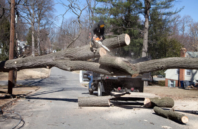 Residential Tree Services-Auburndale FL Tree Trimming and Stump Grinding Services-We Offer Tree Trimming Services, Tree Removal, Tree Pruning, Tree Cutting, Residential and Commercial Tree Trimming Services, Storm Damage, Emergency Tree Removal, Land Clearing, Tree Companies, Tree Care Service, Stump Grinding, and we're the Best Tree Trimming Company Near You Guaranteed!