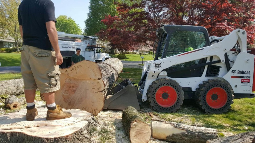 Services-Auburndale FL Tree Trimming and Stump Grinding Services-We Offer Tree Trimming Services, Tree Removal, Tree Pruning, Tree Cutting, Residential and Commercial Tree Trimming Services, Storm Damage, Emergency Tree Removal, Land Clearing, Tree Companies, Tree Care Service, Stump Grinding, and we're the Best Tree Trimming Company Near You Guaranteed!