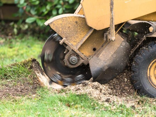 Stump Grinding-Auburndale FL Tree Trimming and Stump Grinding Services-We Offer Tree Trimming Services, Tree Removal, Tree Pruning, Tree Cutting, Residential and Commercial Tree Trimming Services, Storm Damage, Emergency Tree Removal, Land Clearing, Tree Companies, Tree Care Service, Stump Grinding, and we're the Best Tree Trimming Company Near You Guaranteed!