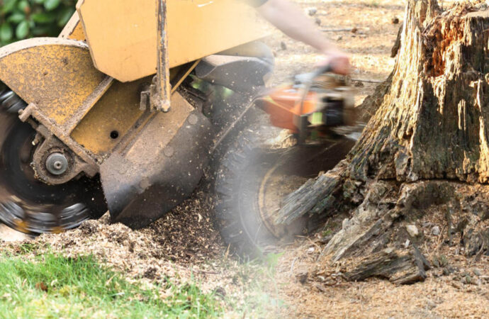Stump grinding & removal-Auburndale FL Tree Trimming and Stump Grinding Services-We Offer Tree Trimming Services, Tree Removal, Tree Pruning, Tree Cutting, Residential and Commercial Tree Trimming Services, Storm Damage, Emergency Tree Removal, Land Clearing, Tree Companies, Tree Care Service, Stump Grinding, and we're the Best Tree Trimming Company Near You Guaranteed!
