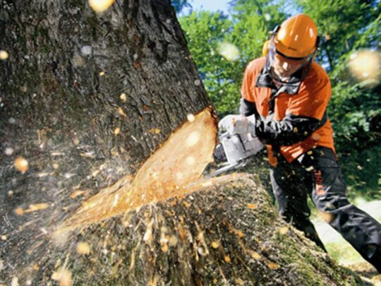 Tree Cutting-Auburndale FL Tree Trimming and Stump Grinding Services-We Offer Tree Trimming Services, Tree Removal, Tree Pruning, Tree Cutting, Residential and Commercial Tree Trimming Services, Storm Damage, Emergency Tree Removal, Land Clearing, Tree Companies, Tree Care Service, Stump Grinding, and we're the Best Tree Trimming Company Near You Guaranteed!