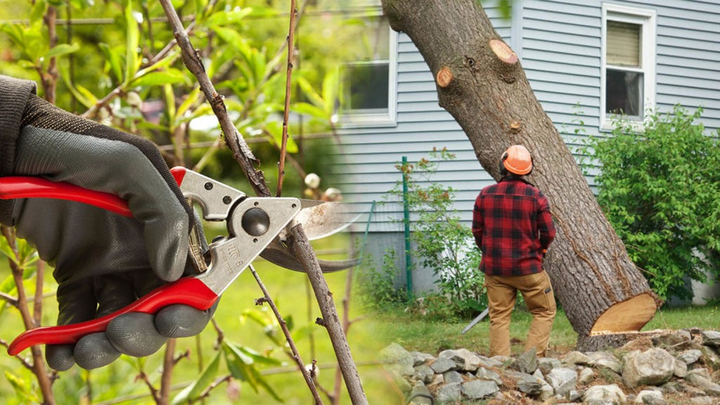 Tree pruning & tree removal-Auburndale FL Tree Trimming and Stump Grinding Services-We Offer Tree Trimming Services, Tree Removal, Tree Pruning, Tree Cutting, Residential and Commercial Tree Trimming Services, Storm Damage, Emergency Tree Removal, Land Clearing, Tree Companies, Tree Care Service, Stump Grinding, and we're the Best Tree Trimming Company Near You Guaranteed!